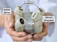 Drive design for a Total Artificial Heart